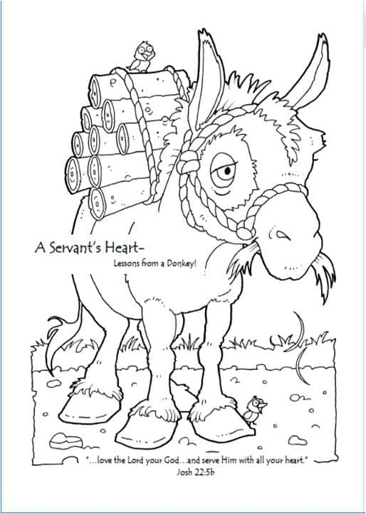 Book 3 -- Lessons from a Donkey